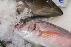 Close-up van vers Gevangen Rode Zeebrasem of Pagrus Pagrus op Ijs voor Verkoop in de Griekse Vissenmarkt Stock Foto