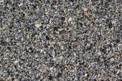 Close-up van Verschillende kleurrijke zeeschelpen De achtergrond van de zeeschelp Textuur van kleurrijke zeeschelpen Royalty-vrije Stock Foto's