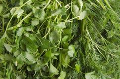 Close-up van verse koriander en dille, verschillende kruiden en smaken stock afbeelding