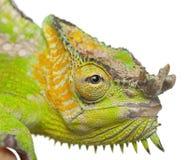 Close-up van vier-Gehoornd Kameleon Royalty-vrije Stock Foto's