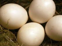Close-up van vier kleine eieren royalty-vrije stock afbeeldingen