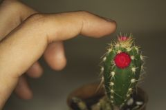 Close-up van vinger wat betreft cactus Stock Foto's