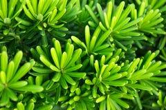 Close-up van vrij Groene Bladerentextuur voor Aardachtergrond stock foto's