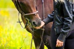 Close-up van vrouw die haar Arabisch paard met snacks voeden stock afbeelding