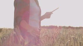Close-up van vrouwen` s hand die organisch tarwegebied doornemen, steadicam schot Langzame Motie De hand van het meisje wat betre stock videobeelden