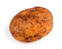 Close-up van vuile Australische organische roodbruine aardappel Royalty-vrije Stock Foto's