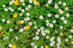 Close-up van weiland in de lentetijd hierboven wordt gezien die van Stock Fotografie