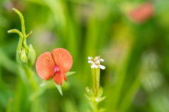Close-up van wilde bloemen van het gebied Stock Foto