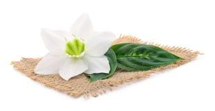 Close-up van witte bloem royalty-vrije stock foto's