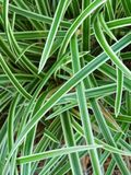 Blades of grass. A close-up of variegated blades of grass Royalty Free Stock Photo