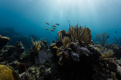 Close-up of a variety of coral and sponges on coral reef in Caribbean Stock Photos