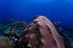 Close up of variety of marine life on reef in Caribbean including yellow and black fish, sponges, sea fans and coral Royalty Free Stock Photography