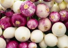 Close up of Various Onion Bulbs stock photo