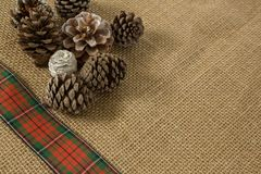 Close up of various pine cones. On burlap Stock Photography