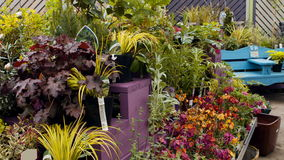 Close-up of various pot plant. At flower shop 4k stock video footage