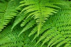 Close-up verde da folha fotografia de stock