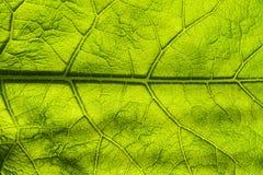 Close up verde da folha do fundo do sumário Imagem para o projeto e o projeto Folha verde da textura Fundo da natureza foto de stock