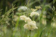 Close up verde do prado Fundo da foto das gramas selvagens fotografia de stock