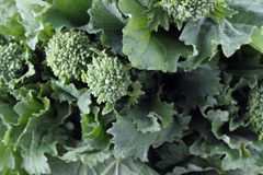 Close up verde do rapini Imagens de Stock