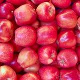 Close up vermelho Crunchy das maçãs imagem de stock royalty free