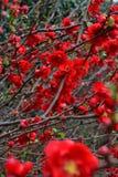 Close up vermelho selvagem da flor disparado com fundo bokehed imagem de stock