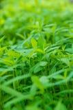 Close-up verse groene bladeren met onduidelijk beeldachtergrond Stock Foto