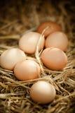 Close-up vertical de ovos marrons frescos na palha Fotografia de Stock