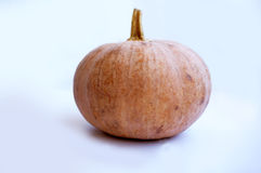 Close up of very fresh pumpkins Stock Image