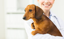 Close up of vet with dachshund dog at clinic. Medicine, pet, animals, health care and people concept - close up of happy veterinarian or holding dachshund dog at Royalty Free Stock Images