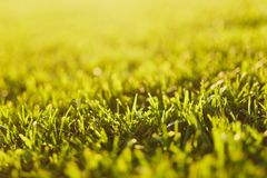 Close up vibrant spring green fresh golf grass, sunshine lawn. Nature texture, green background for wallpaper. Soft. Focus. Abstract. Soccer field or sports royalty free stock photography