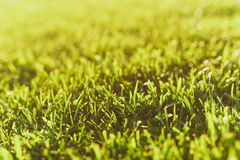 Close up vibrant spring green fresh golf grass, sunshine lawn. Nature texture, green background for wallpaper. Soft. Focus. Abstract. Soccer field or sports royalty free stock images