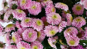 Close-up, view from above, Flowers, bouquet, rotation on white background, floral composition consists of pink Santini stock video