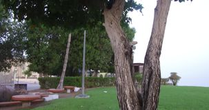 Close up of view amazing trees with green leaves in the garden near to beach amazing background. In Oman muscat beach recorded in 4K stock video