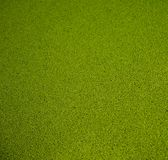 Artificial green grass Stock Image