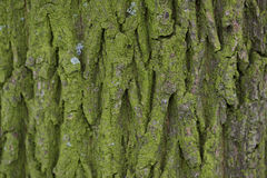 Close Up View Of The Bark Of A Tree Stock Image