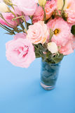 Close-up view of beautiful blooming pink flowers in vase. Isolated on blue Stock Photos