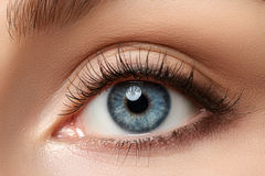 Close up view of beautiful blue female eye royalty free stock photography