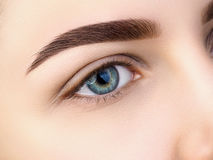 Close up view of beautiful blue female eye. Perfect trendy eyebrow. Good vision, contact lenses, brow bar or fashion eyebrow makeup concept royalty free stock photos