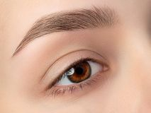 Close up view of beautiful brown female eye royalty free stock image