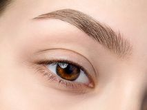 Close up view of beautiful brown female eye stock image
