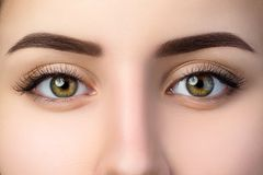 Close up view of beautiful brown female eyes royalty free stock image