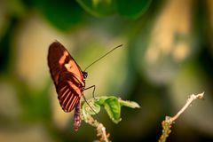 Beautiful butterfly sitting on a plant leaf. A close-up view of a beautiful butterfly sitting on a plant leaf stock image
