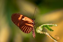 Beautiful butterfly sitting on a plant leaf. A close-up view of a beautiful butterfly sitting on a plant leaf royalty free stock photo