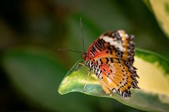 Beautiful butterfly sitting on a plant leaf. A close-up view of a beautiful butterfly sitting on a plant leaf stock photo