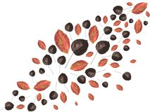 Close-up view of beautiful dried autumn leaves. On white stock illustration