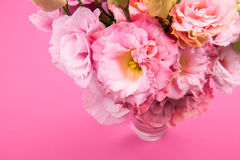 Close-up view of beautiful tender pink eustoma flowers bouquet in vase. Isolated on pink Royalty Free Stock Photos