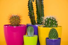 Close-up view of beautiful various green succulents in colorful pots. Isolated on yellow stock photo