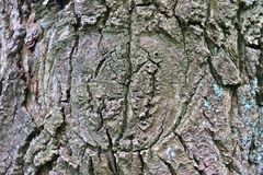 Close up view on beautifully detailed tree bark of oaks and other trees. Found in northern european forests royalty free stock photos