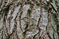 Close up view on beautifully detailed tree bark of oaks and other trees. Found in northern european forests stock photography