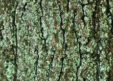 Close up view on beautifully detailed tree bark of oaks and other trees. Found in northern european forests stock photos